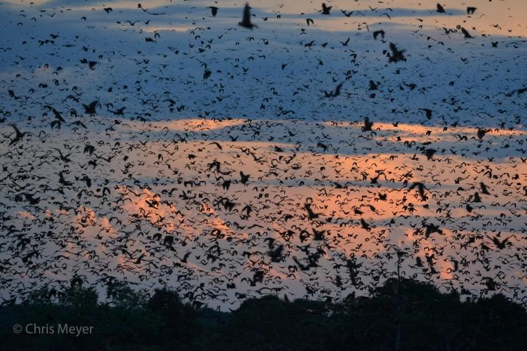Bat Migration 4.jpg