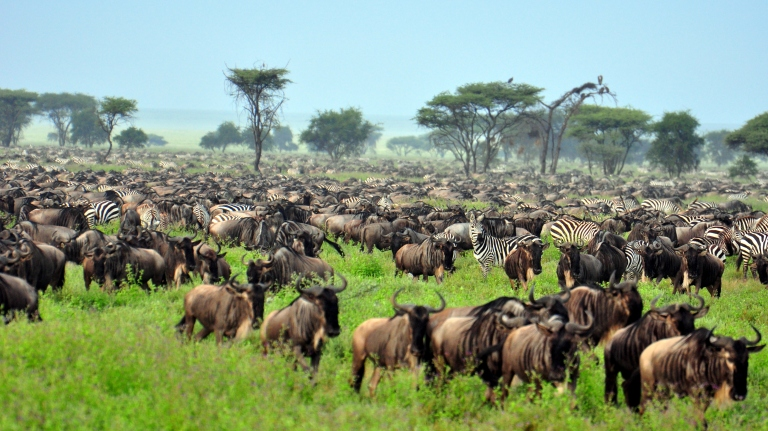Great Migration Promotion (1)