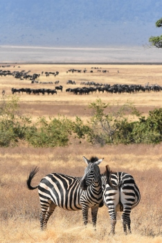 Great Migration Promotion (3)