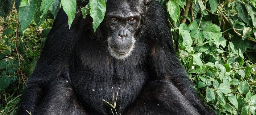 Uganda Gorilla andWildlife