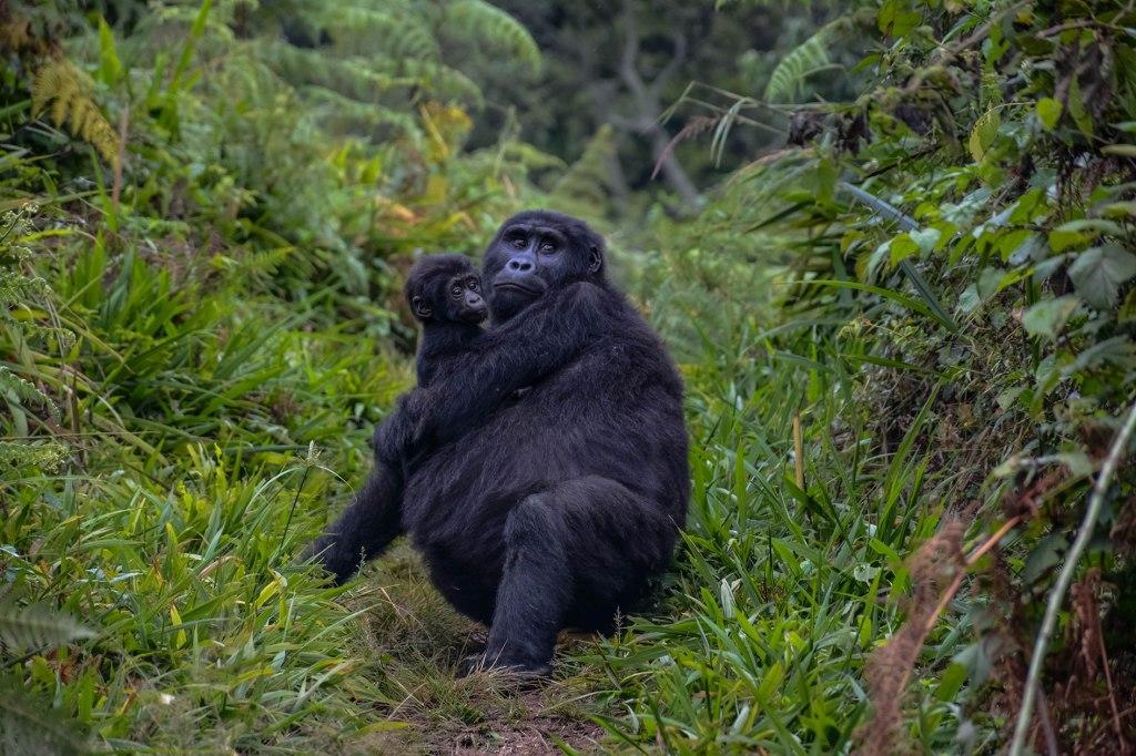 Uganda Gorilla and Wildlife Safari