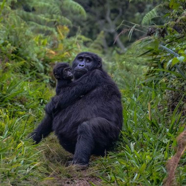 Uganda Gorilla and Wildlife Safari