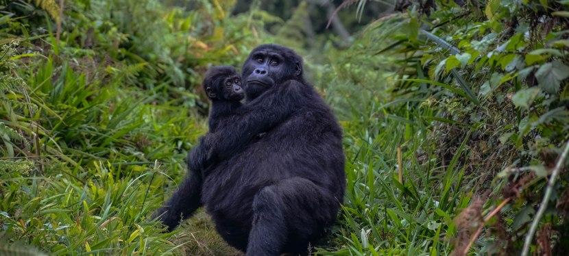 Uganda Gorillas &Wildlife