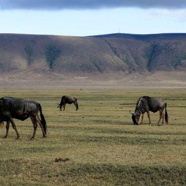 Ngorongoro-Crater-(1)