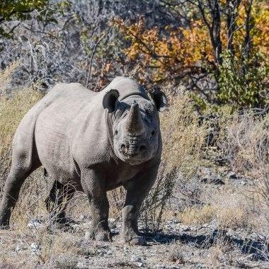 Rhino Walking Safari in Namibia