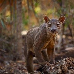 Madagascar Wildlife Safari