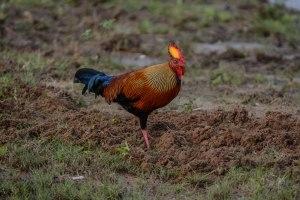 Bucket list Sri Lanka Wildlife Tour