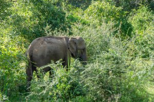Bucket List Wildlife Safari in Sri Lanka