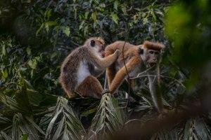 Bucket List Wildlife Tour in Sri Lanka